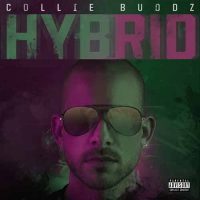 Collie Buddz Hybrid